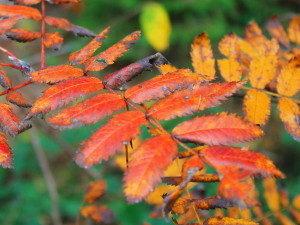Herbst, Zeit, Wald, Jahreszeit, farbenfroh