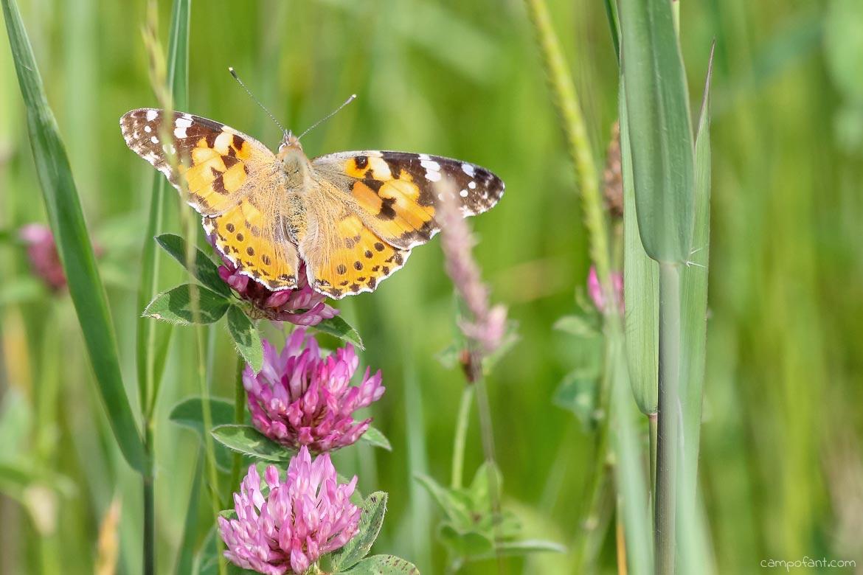 Schmetterlinge Naturschutzgebiet