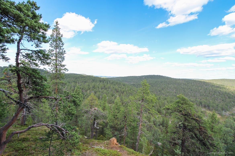 Finnland Wälder