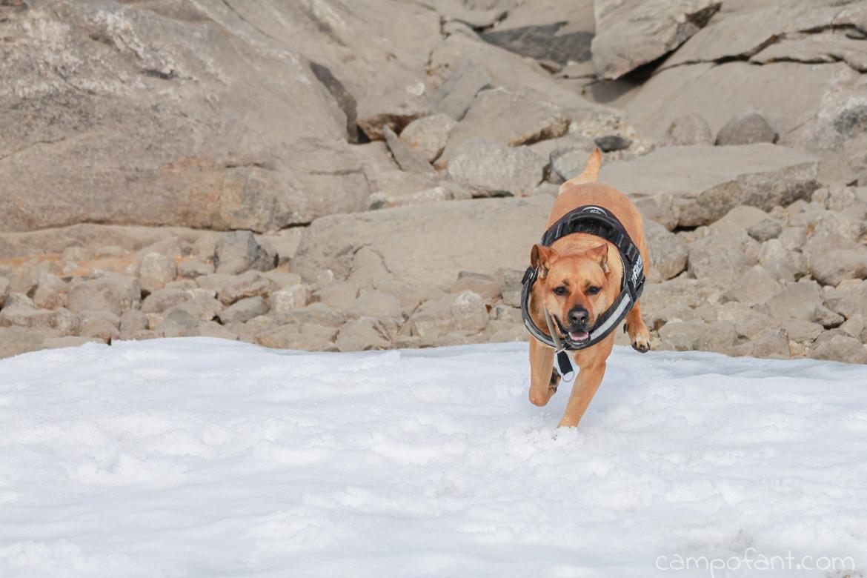 Hund fixieren Hundepflock