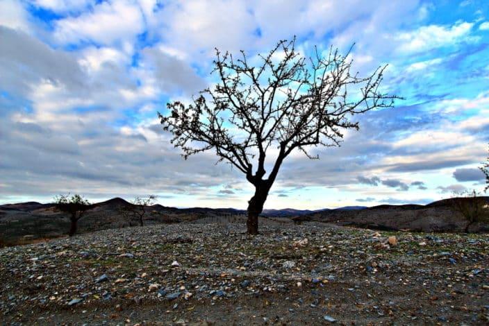 Karger Baum Spanien
