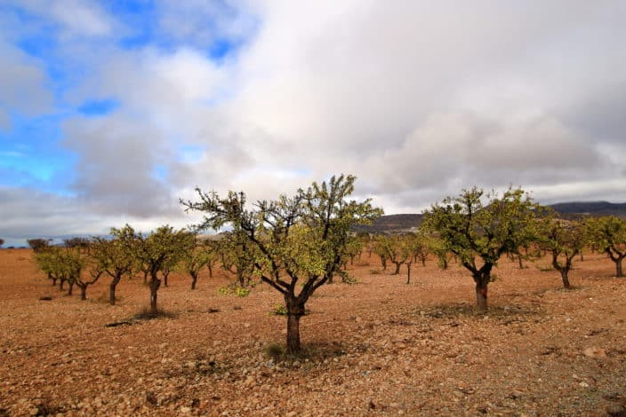 Spaniens Hinterland, Olivenhain
