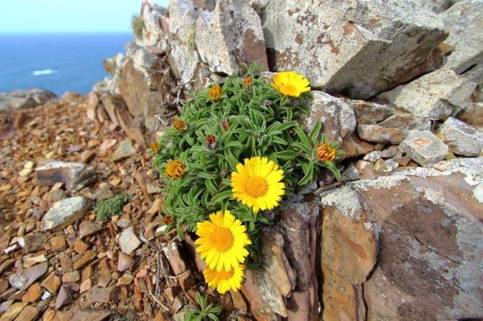 Portugal, Blumen