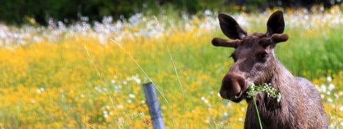 campofant, reiseblog, reiseberichte, weltreise, norwegen