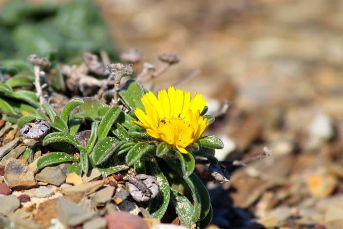Blumen Portugal