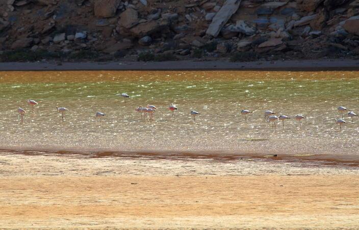 Marokko, Flamingos