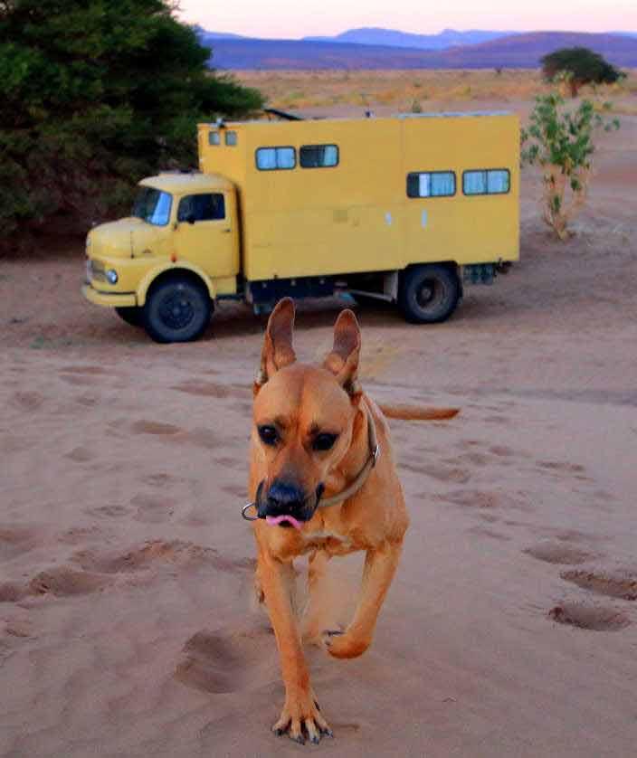 Wohnmobil, Hund, Wüste