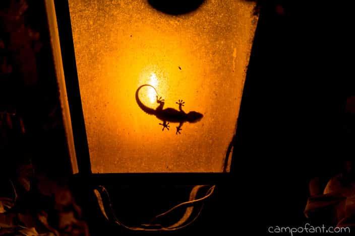 gecko-lampe