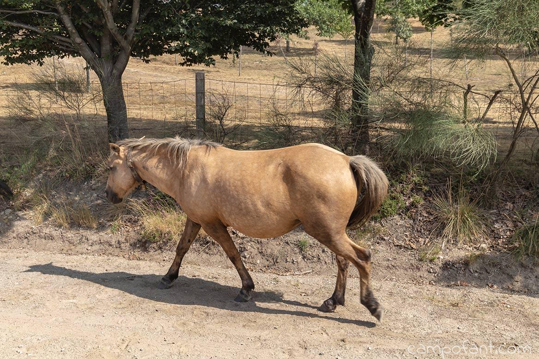 Pferd, Portugal