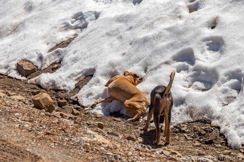 Hunde Schnee