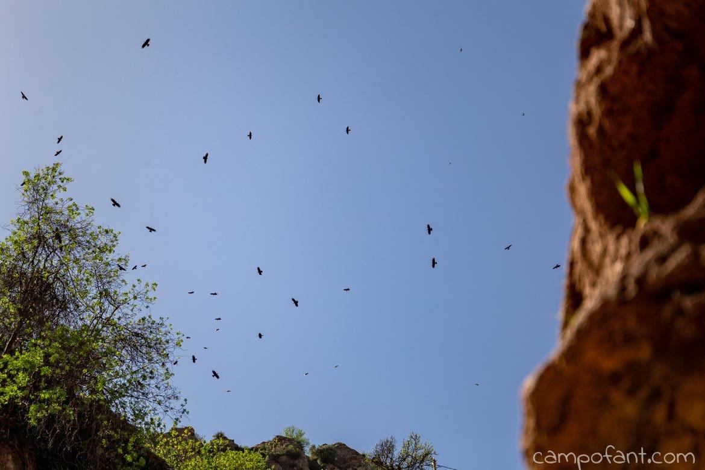 Imi-n-Ifri Naturbrücke Vögel