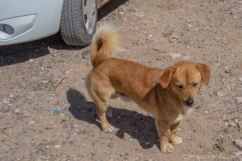 Straßenhunde Tafedna