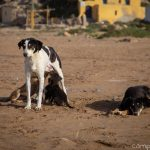 Hundefamile