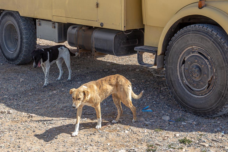 Tafedna Straßenhunde