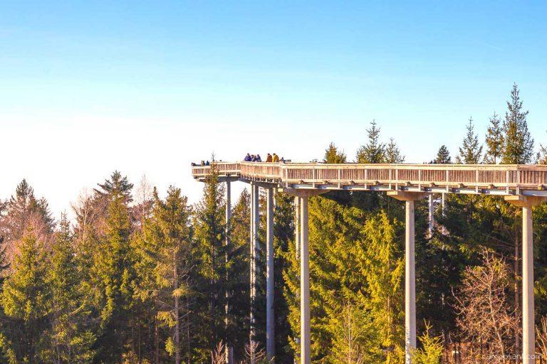 Waldwipfelweg St. Englmar Niederbayern